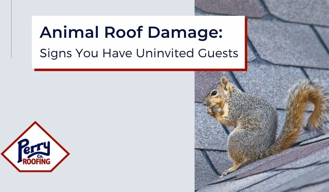 Animal Roof Damage: Signs You have Uninvited Guests